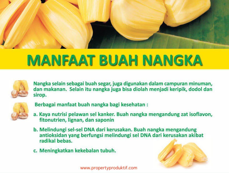 manfaat nangka kavling aljami bee garden