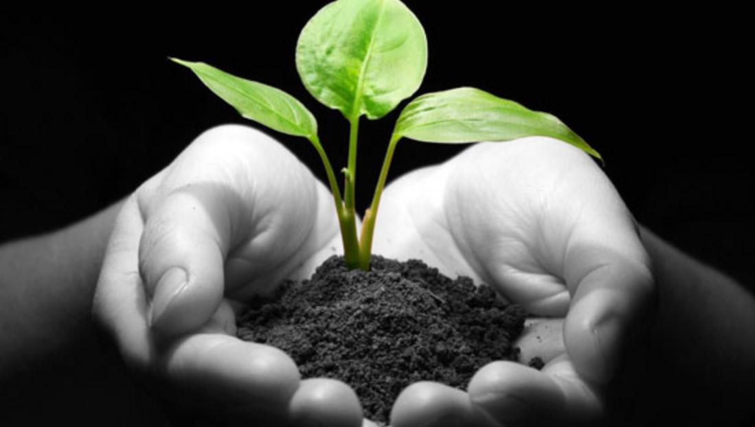 Keunggulan Investasi Tanah Kavling Produktif