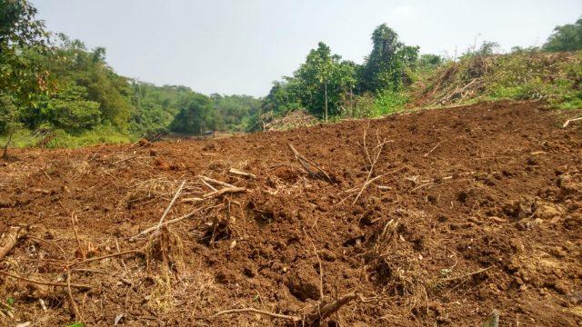 Progres Landclearing Kavling Prosyar Jasinga