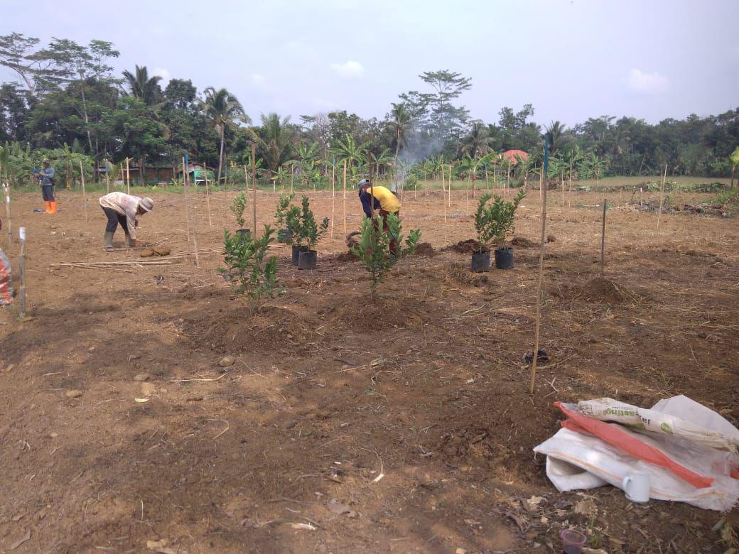 progres kavling aljami bee garden