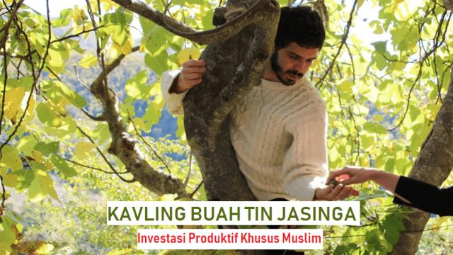 Kavling Buah Tin – Investasi Produktif Kebun Buah Untuk Kaum Muslimin