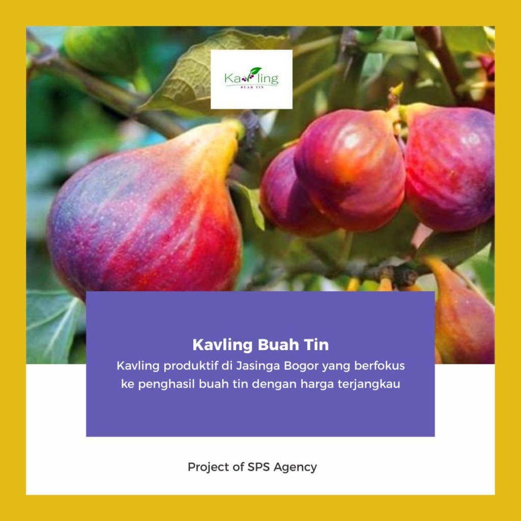 kavling buah tin