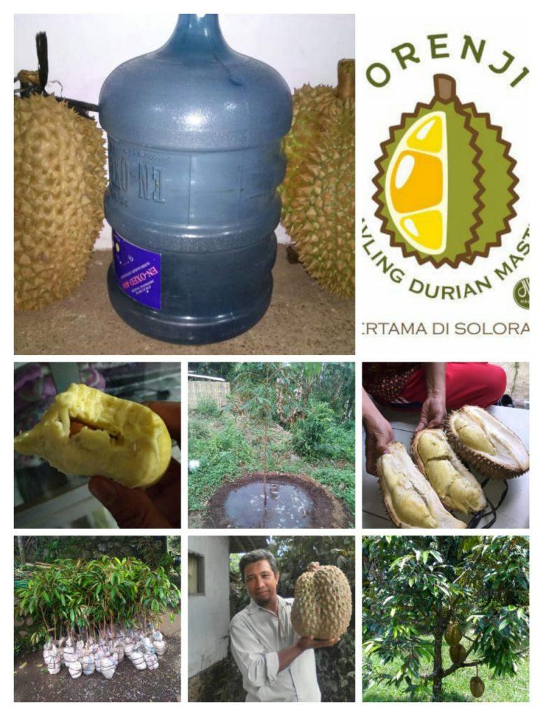 kavling durian